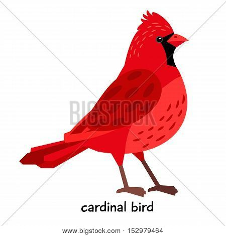 Nice red Cardinal Bird with black breast vector illustration