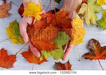 Men's hands hold autumn leaves on white wooden table background.