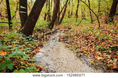 the creek in the autumn forest in day