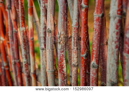 the fence of a twigs close up