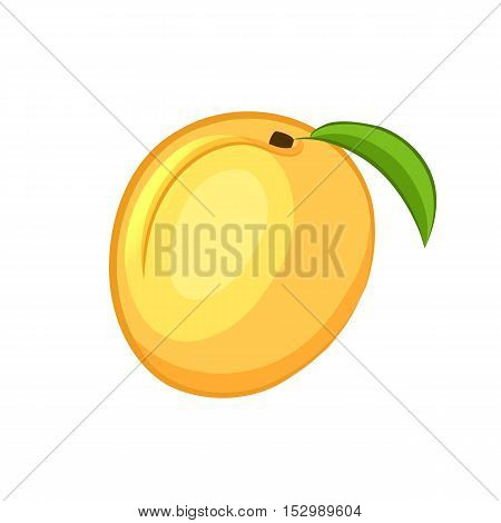 Apricot. Cartoon icon. Isolated object on a white background. Vector illustration.