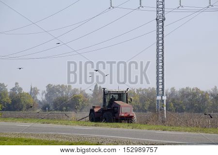 Tractor Plowing A Field And Crows Flying Around Him In Search Of Food