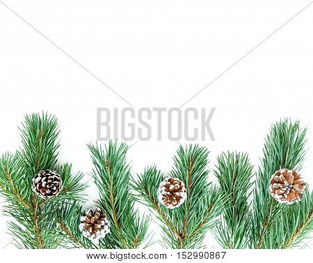 Border out of fir tree twigs with snowy pine cones isolated on white background.