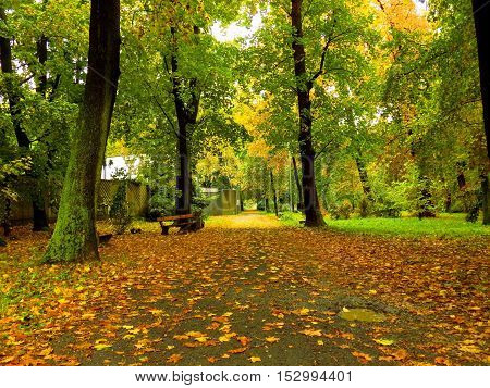 Colorful leaves on deciduous trees and walkway in park during autumn