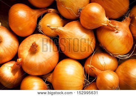 Fresh golden bulbs of onion as a background