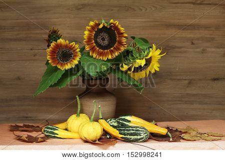 Beautiful decorative sunflowers with a reddish tint