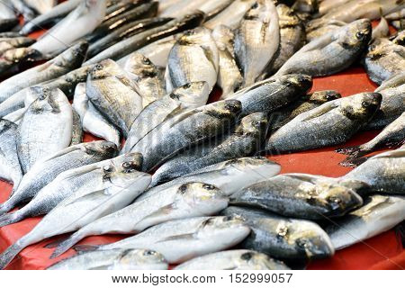 Fresh sea fish on the ice, market,  close up