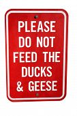Don't Feed The Ducks!
