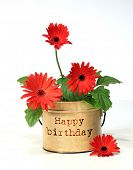 stock photo of happy birthday  - Pretty potted happy birthday daisy - JPG