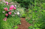 pic of english cottage garden  - Pretty path in an English cottage garden - JPG