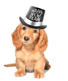 pic of new years baby  - Happy new year - JPG