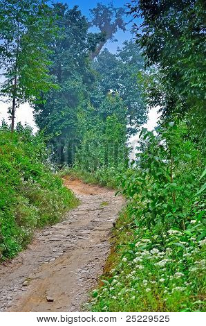 Clay Stone Road In Jungle,green Trees,blue Sky,bend Of A Road