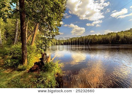 Wood lake in summer day