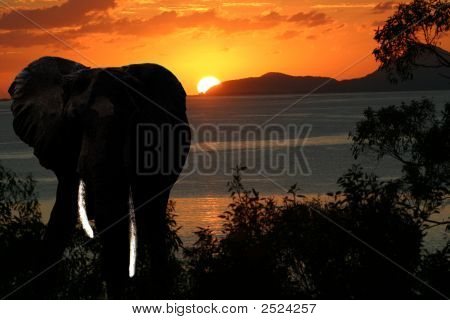 Elephant Safari Sunset