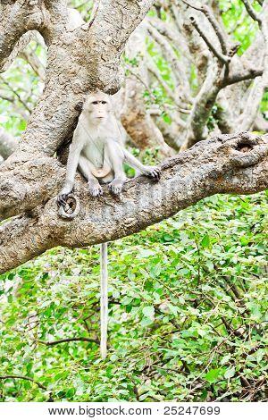 Jovem macaco solitário