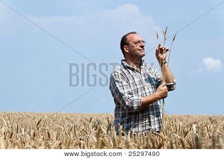 farmer - farmers in the corn field.