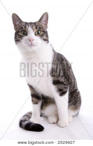 Curious Housecat