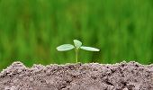 Small Plant Is Growing Represent To Hope, Start Or Life, The Seedling Are Growing From The Rich Soil poster