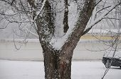pic of crotch  - Snow on tree trunk