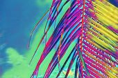 Coco Palm Leaf Closeup On Sky Background. Neon Palm Leaf On Vibrant Sky. Tropical Vacation Digital I poster