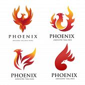 Luxury Phoenix Logo Concept, Best Phoenix Bird Logo Design, Phoenix Vector Logo,creative Logo Of Myt poster