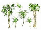 Set Of Isolated Coconut Or Queen Palm Trees With Leaves. Beach And Rainforest, Desert Coco Flora. Fo poster