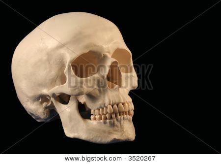 An Angled Skull