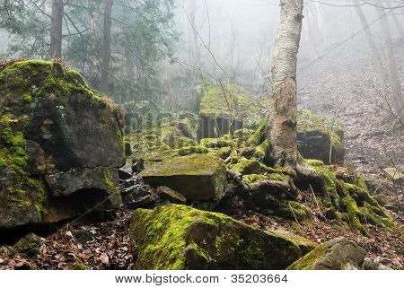 Forest Of Rocks