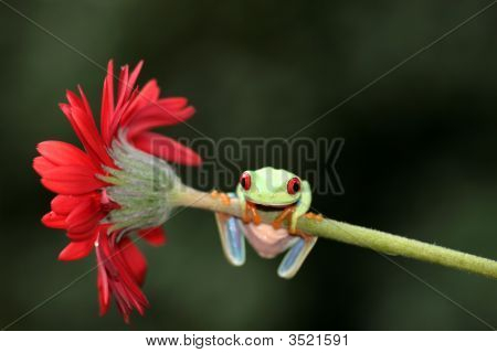 Tree Frog On A Flower