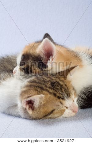 Two Sleeping Kittens, Isolated On A Blue