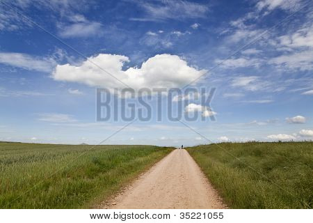 Caminho ao longo de campos de trigo