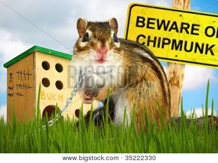 Ridiculous Malicious Chipmunk