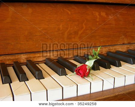 Rose Bud on Piano
