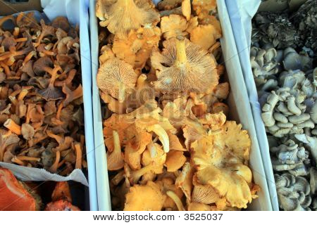 Mushrooms, Freshly Harvested
