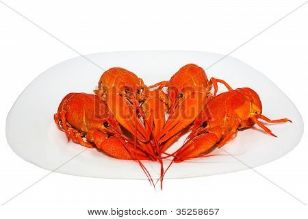 Boiled Crawfish On A Plate
