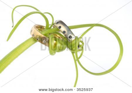 Wedding Rings Bound With Vines