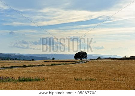 Rural Landscape With Wheat  Fields And Mountains. Sunset. Spain.