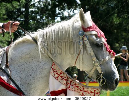 White Horse Head In Costume