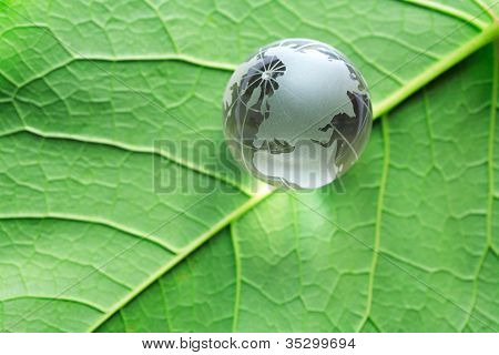 Globe On Green Leaf