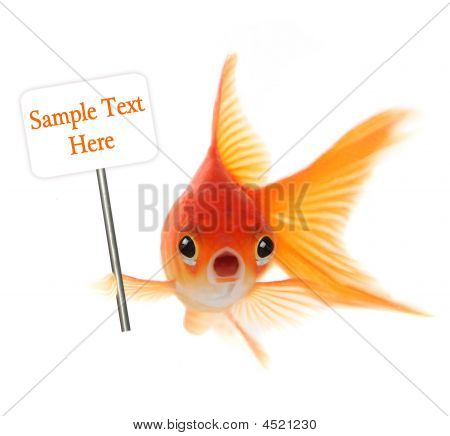 schockiert Goldfish isolated on white background