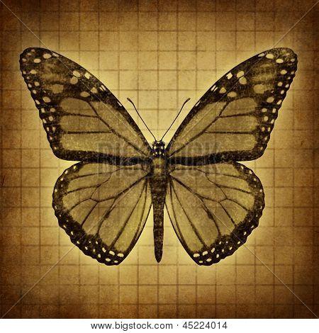 Schmetterling Grunge Texturen