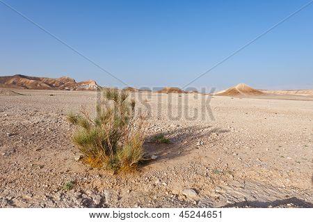 Sandy Reserve