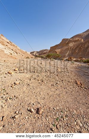 Dangerous Desert