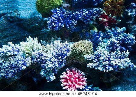 Bild von Korallen auf dem Meeresgrund