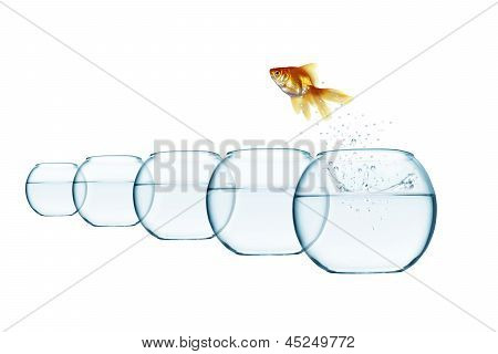 Jumping Out Fish From Aquarium