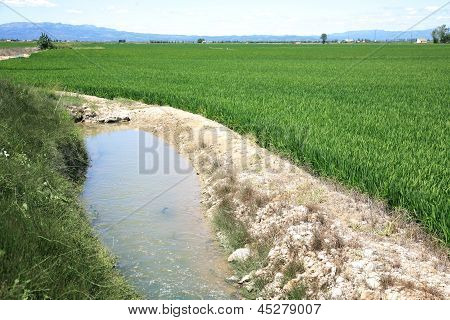 Irrigation Canal System In Rice Field Spain