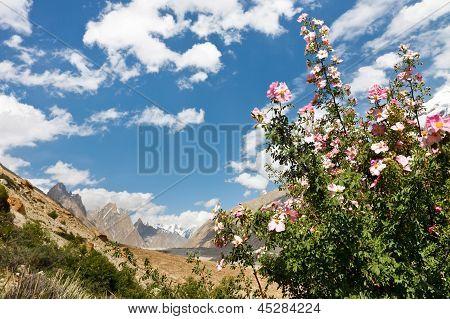Karakorum Flora