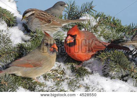 Mixed Flock Of Birds