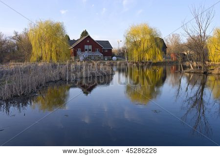 Barns Reeds And Willows On Pond