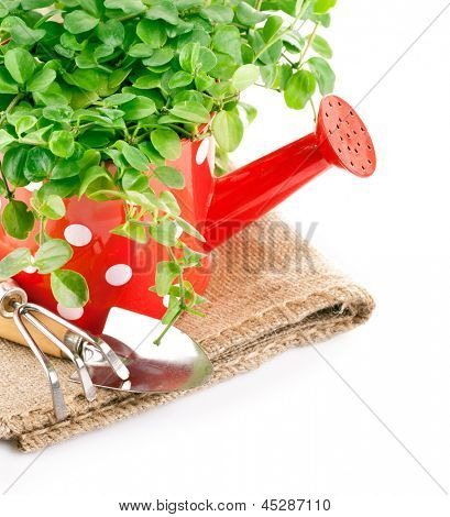 green plant in red watering can with garden tool isolated on white background